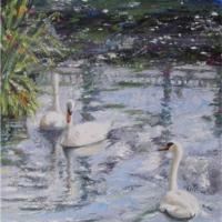 Study of Swans I
